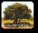 Vign_arbre-a-palabres